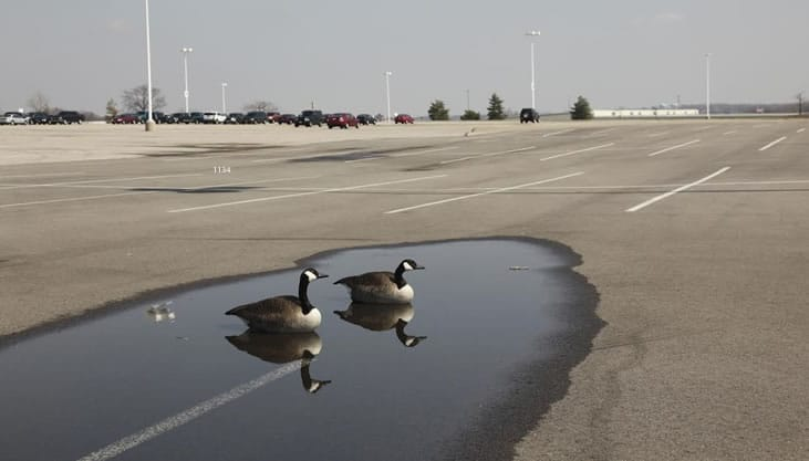 puddles-on-parking-lot